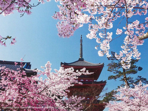 Japan and Cherry Trees